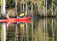 Kayaking on the Suwannee River